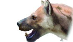 Descubren una nueva especie de carnívoro en el madrileño Cerro de los Batallones
